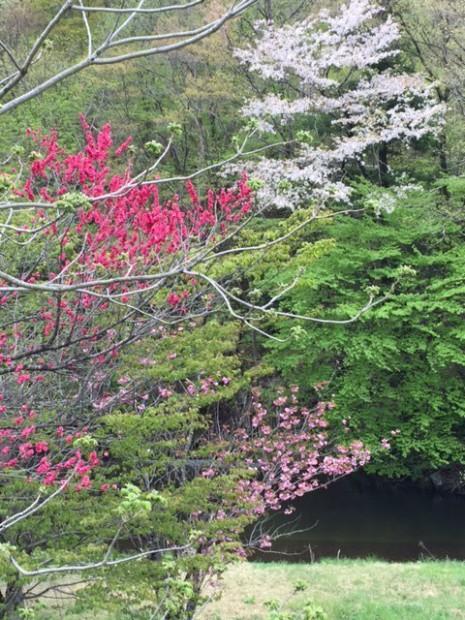 大槌町の春