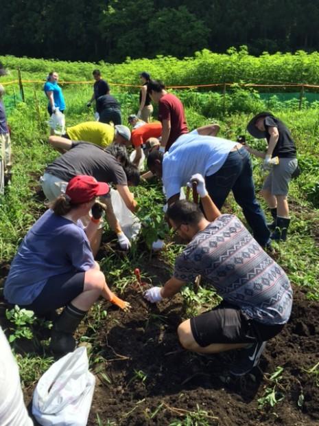 MIT学生ジャガイモ掘り